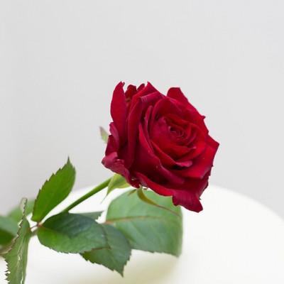 Роза Красная 1 метр