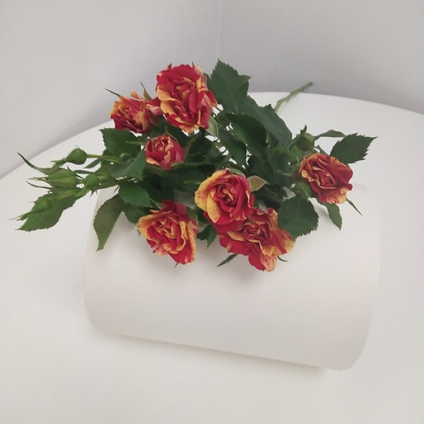 Роза кустовая желто-красная
