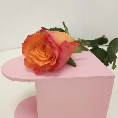 Роза оранжевая Кения 50 см