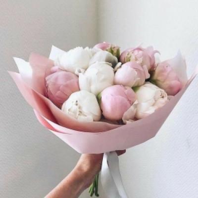 11 бело-розовых пионов