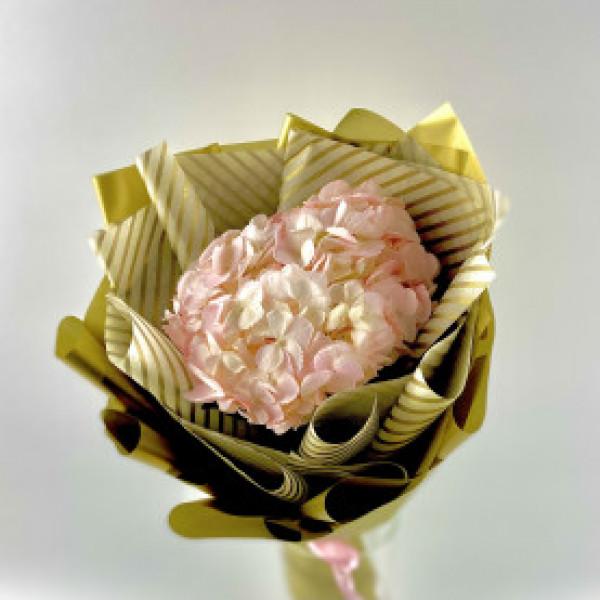 Гортензия нежно розовая в упаковке