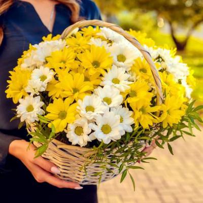 Корзина с 11 кустовыми хризантемами