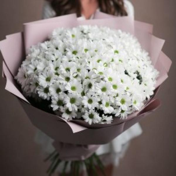 Букет из 25 белых хризантем Ромашек