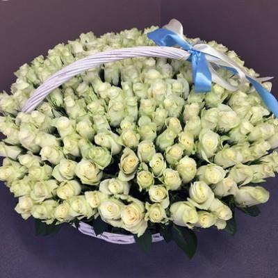 Корзина с 201 белой розой