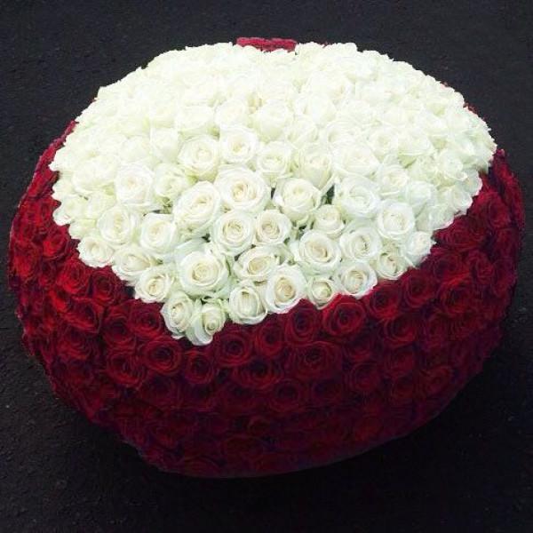 501 роза Сердце