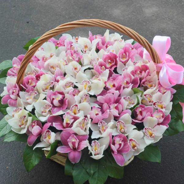 Корзина с 59 бело-розовыми орхидеми