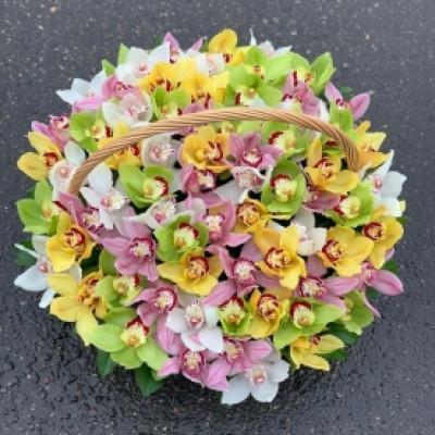 Корзина из 59 орхидей ассорти