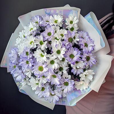 Букет из белой и сиреневой хризантемы Ромашки
