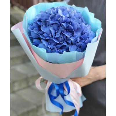 Гортензия синяя в упаковке
