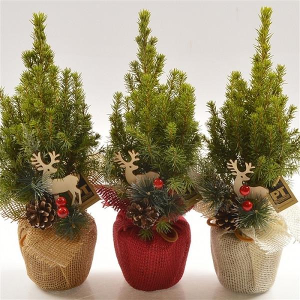 Живые елки в праздничной упаковке
