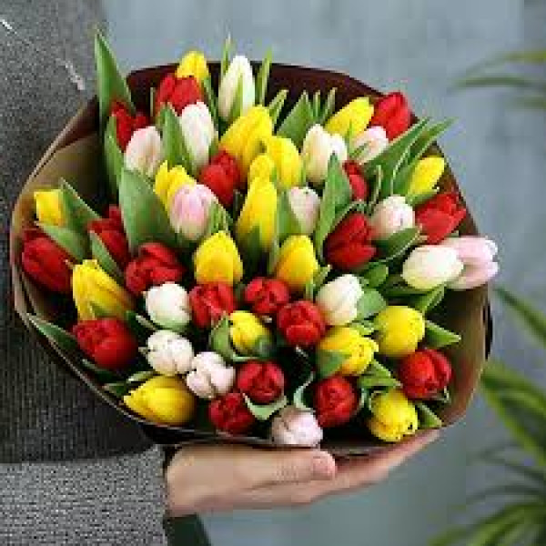 51 тюльпан Ассорти